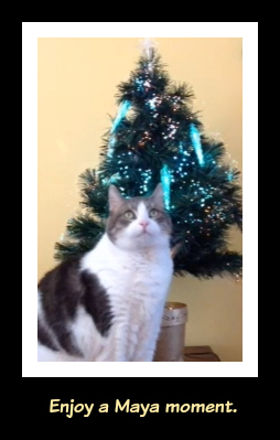 Christmas_Cat-A